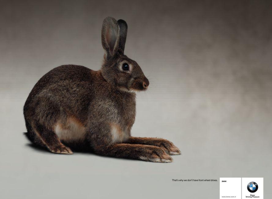 Rabbit_0.jpg